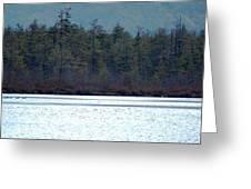 Geese On Labrador Pond Greeting Card