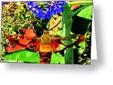 Georgian Moth Greeting Card
