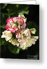 Geranium Flowers Greeting Card
