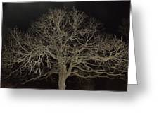 Ghostly  Tree Greeting Card