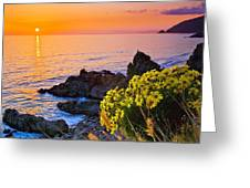 Giant Coreopsis Sunset Greeting Card