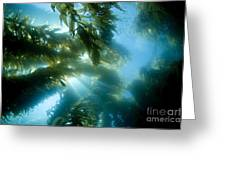 Giant Kelp Forest Greeting Card