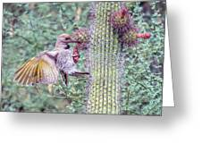 Gilded Flicker 4167 Greeting Card