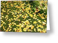 Ginkgo Biloba Leaves Greeting Card