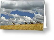 Giraffes On The Horizon Greeting Card