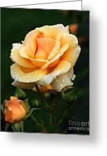 Glowing Rose Greeting Card