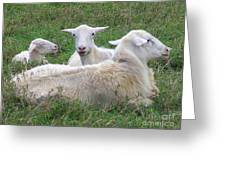Goat Family Greeting Card