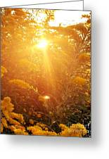 Golden Days Of Autumn Greeting Card