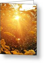 Golden Days Of Autumn Greeting Card