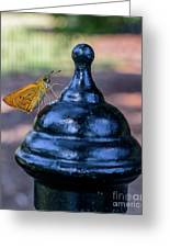 Golden Moth Greeting Card