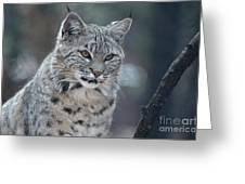 Gorgeous Bobcat's Face Up Close Greeting Card