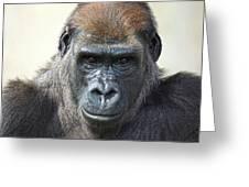 Gorilla 1 Greeting Card