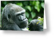 Gorilla Headshot Greeting Card