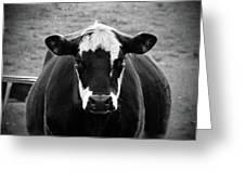 Milk Anyone? Greeting Card