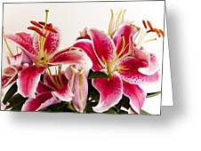 Graceful Lily Series 10 Greeting Card