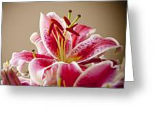 Graceful Lily Series 14 Greeting Card