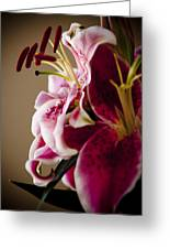 Graceful Lily Series 16 Greeting Card