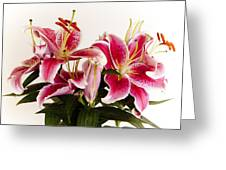 Graceful Lily Series 9 Greeting Card