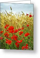 Grain And Poppy Field Greeting Card by Elena Elisseeva