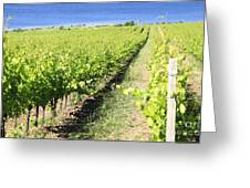 Grapevines In A Vineyard Greeting Card