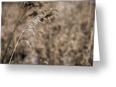 Grass Blade Greeting Card