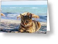 Gray Cat On The Background Of The Sea 1 Greeting Card