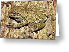Gray Tree Frog Greeting Card