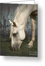 Grazing Greeting Card by Betty LaRue