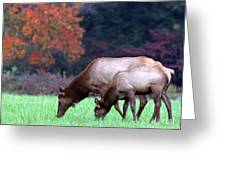 Grazing Together Greeting Card