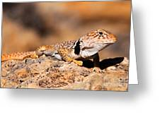 Great Basin Collared Lizard Greeting Card