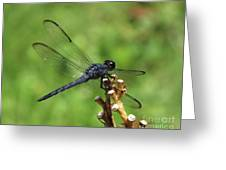 Great Blue Skimmer 5 Greeting Card