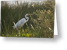 Great Egret At Coba Village Greeting Card