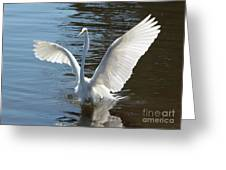 Great Egret Wings Greeting Card