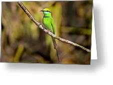 Green Bee-eater Greeting Card