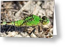 Green Dragonfly Closeup Greeting Card