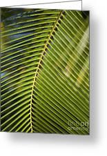 Green Palm Leaf Greeting Card