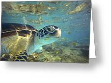 Green Sea Turtle Balicasag Island Greeting Card