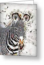 Grevys Zebra, Samburu, Kenya Greeting Card