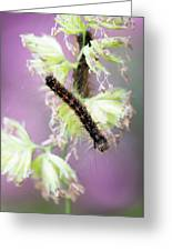 Gypsy Moth Caterpillar Greeting Card