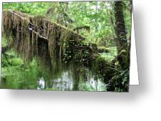 Hall Of Mosses - Hoh Rain Forest Olympic National Park Wa Usa Greeting Card