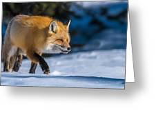 Handsome Mr. Fox Greeting Card