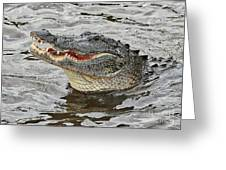 Happy Florida Gator Greeting Card