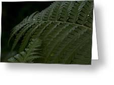 Hapuu Pulu Hawaiian Tree Fern  Greeting Card