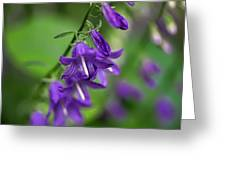 Harebells 2n Greeting Card