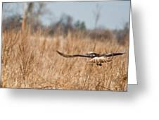 Hawk Soaring Over Field Greeting Card