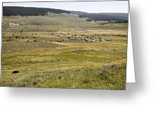 Hayden Valley Herd Greeting Card