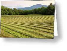 Hayfield Landscape Greeting Card