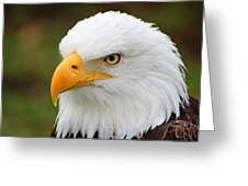 Head Of An American Bald Eagle Greeting Card