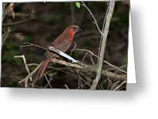 Hepatic Tanager At The Coba Ruins Greeting Card