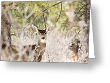 Herd Of Mule Deer In Deep Snow Greeting Card